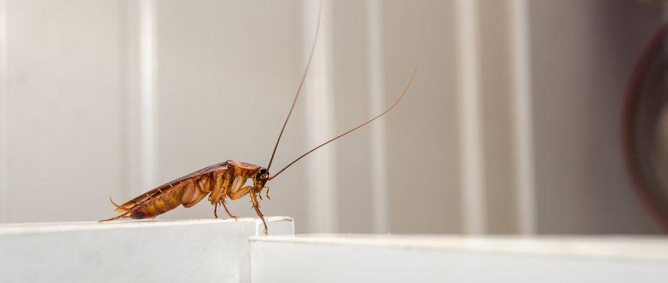 La cucaracha robótica podría darse un buen chapuzón