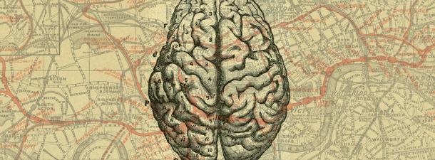 Jugando a mapear el cerebro