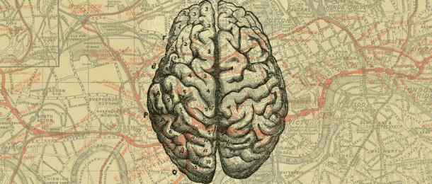 cerebro mapa detalle