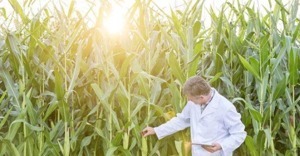 inspector maiz ciencia rural