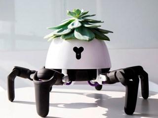 maceta planta robot sol luz
