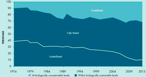 océanos contaminación plásticos mar peces pesca