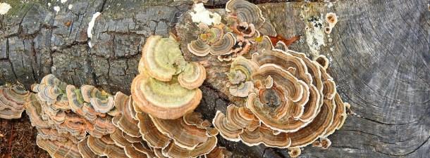 Estos hongos pueden ayudar en la lucha contra la contaminación del plástico
