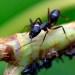Las hormigas nos enseñan cómo evitar atascos en las ciudades