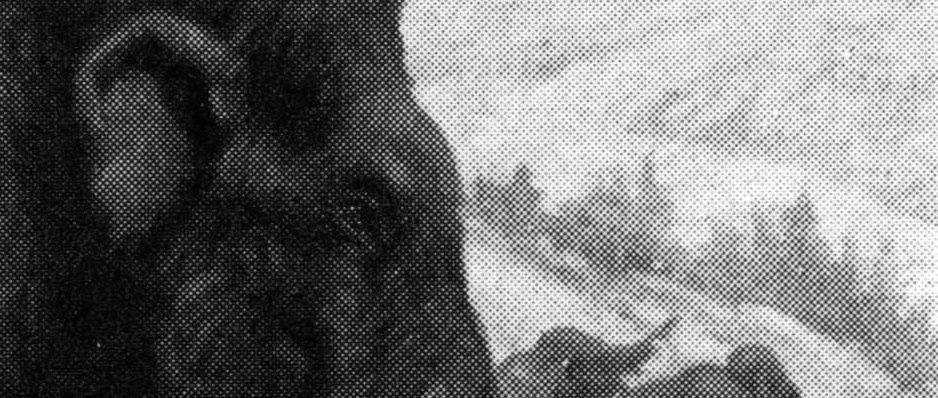 Una cría de caballo puede ser la clave para la clonación de animales prehistóricos