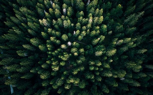 bosque drones dron naturaleza