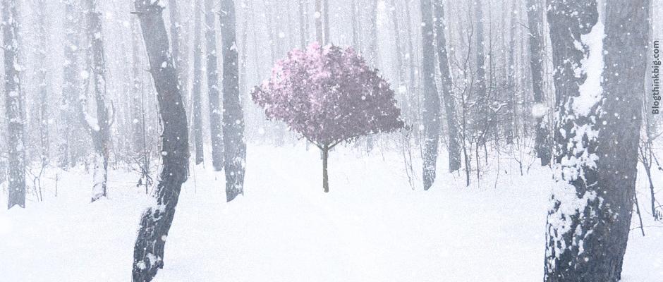 El porqué del florecimiento de algunos cerezos en Japón