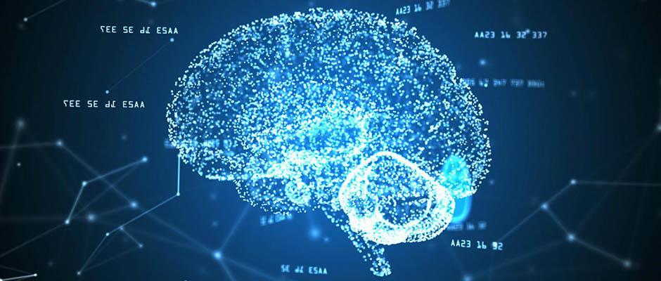 Un equipo de neurocientíficos crea una red de cerebros conectados