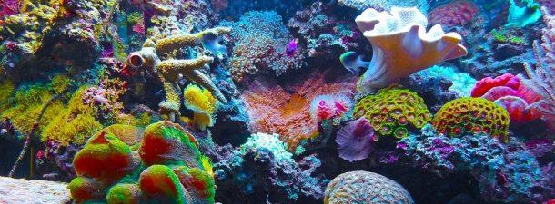 Una nueva esperanza para salvar el coral