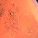 Elon Musk afirma que hay un 70% de posibilidades de mudarse a Marte