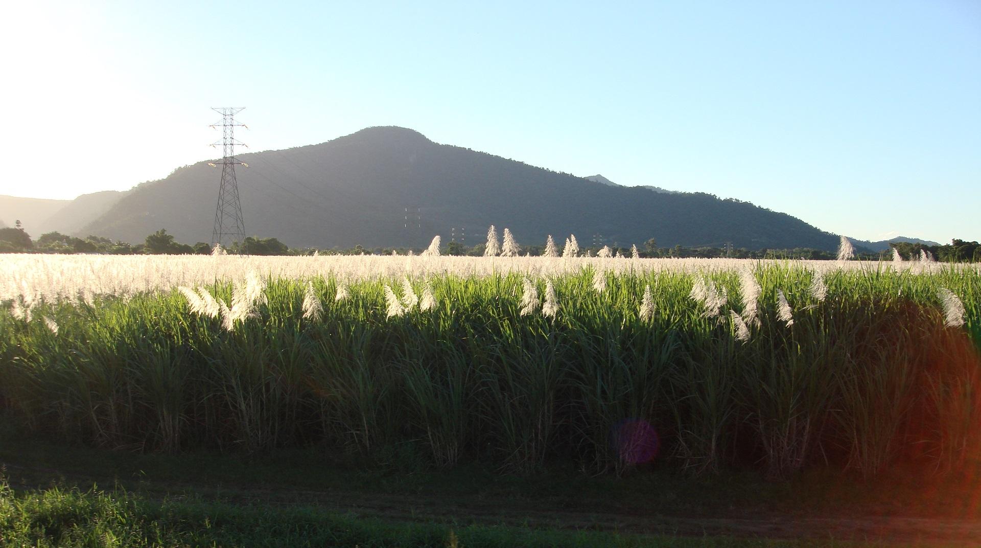 Isla Mauricio recurre a la caña de azúcar como alternativa al petróleo importado