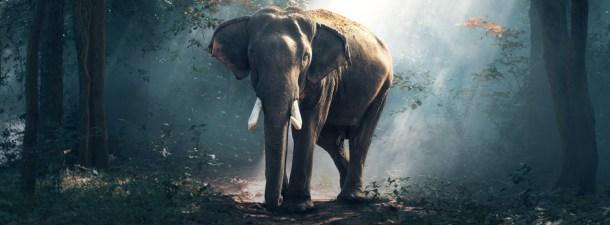 Más elefantes gracias a la Inteligencia Artificial