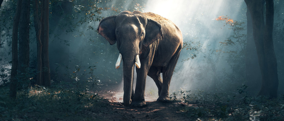inteligencia artificial elefantes big data