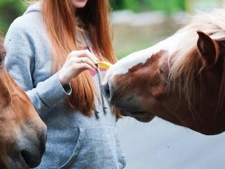 inteligencia artificial y caballos foto cabecera big data luca
