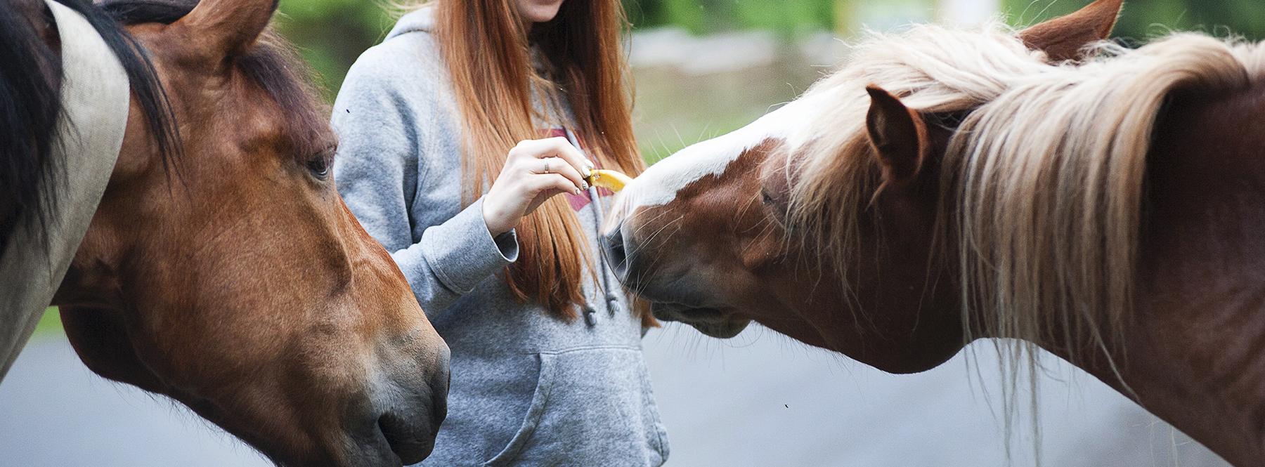 Inteligencia artificial y caballos