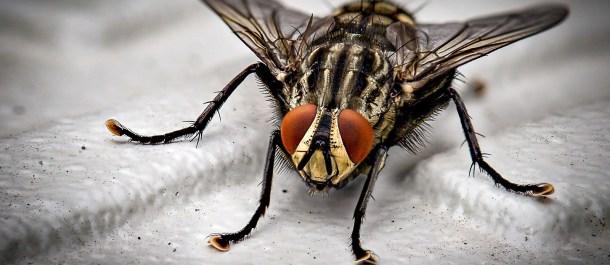hambre mundo ejemplos tecnología puede hacerlo mosca