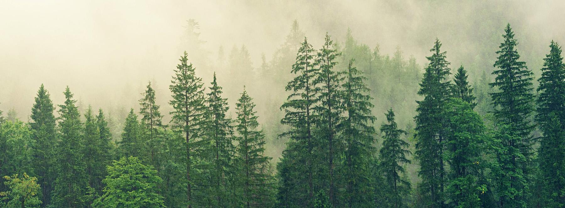 Madera-met%c3%a1lica-titanio-bosque-arboles