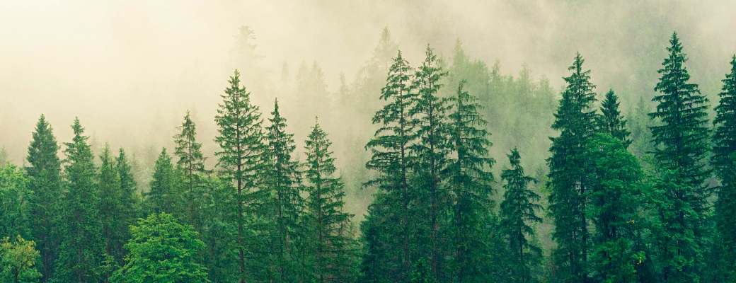 parques nacionales de españa madera metálica titanio bosque arboles