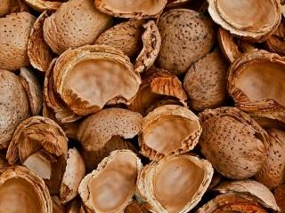cáscaras de almendra frutos secos biomasa