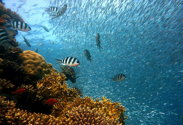 peces calentamiento global