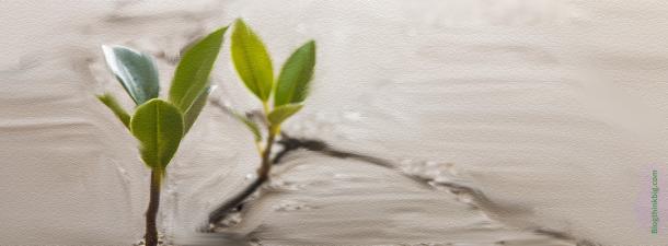 La Tierra: un recurso decisivo para frenar el cambio climático