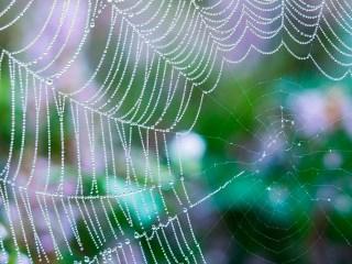 musculos roboticos tela de araña