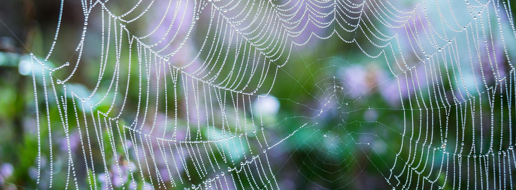 ¿Músculos artificiales para robots elaborados con tela de araña?