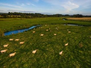 drones para pastorear