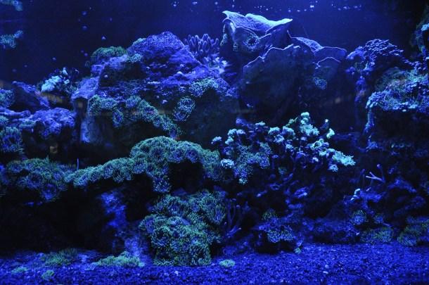 Gran Barrera de Coral reducción Australia arrecife