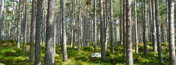 5 apps para proteger el medio ambiente