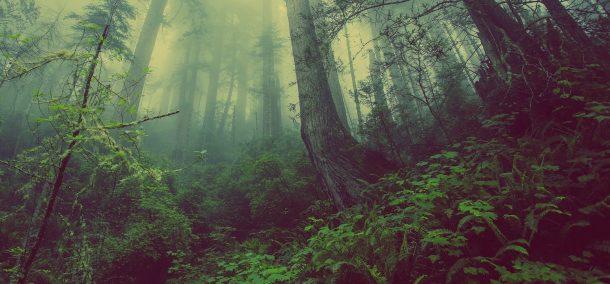 Medio ambiente árboles bosque
