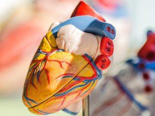 Corazón 3D Impresión Trasplantes