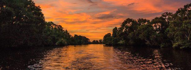5 razones por las que debemos preservar los manglares
