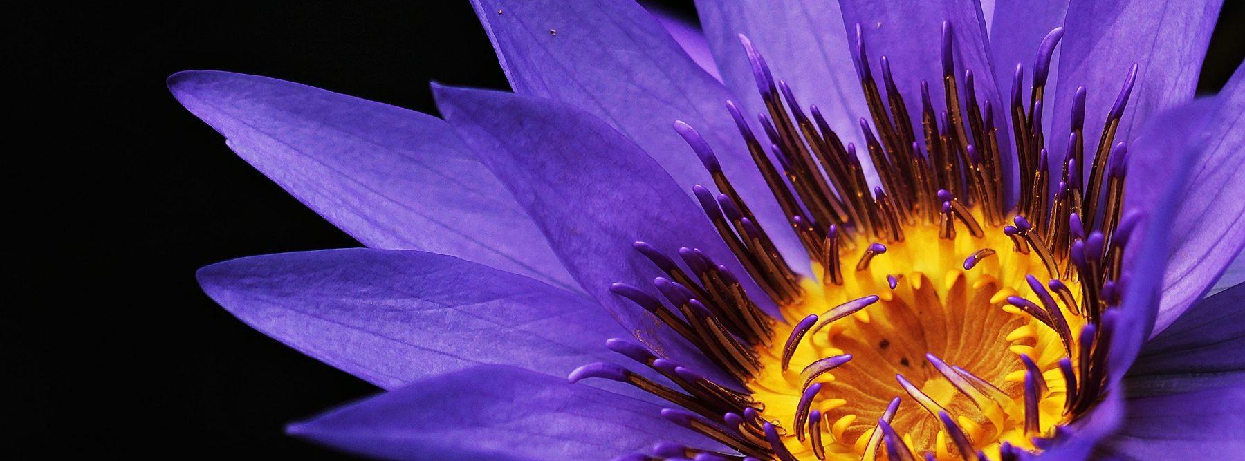La NASA busca medir el crecimiento y el brillo de las plantas