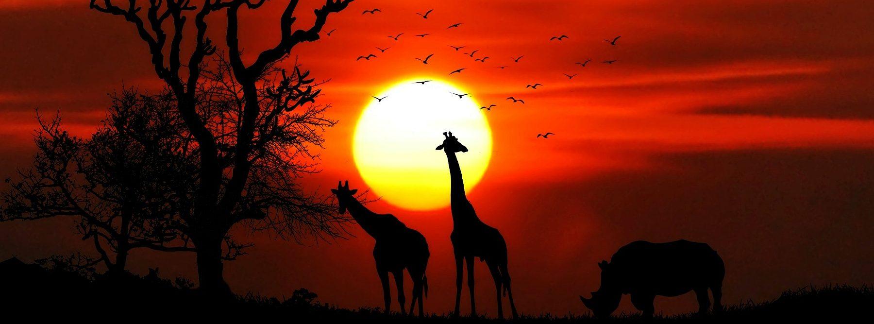 Día de África: ¿cuál es su origen y cuáles son sus objetivos?