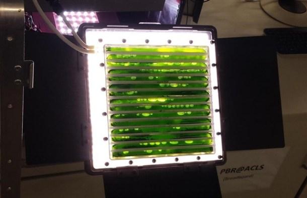 Algas Oxígeno Biorreactor