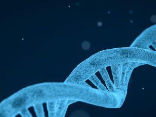 Epigenética ADN Genoma Memoria