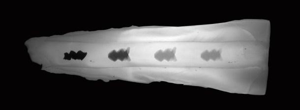 Estos robots microscópicos limpian la placa dental sin pasar por el dentista