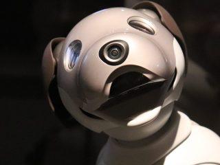 Doggo Perro Robots Stanford