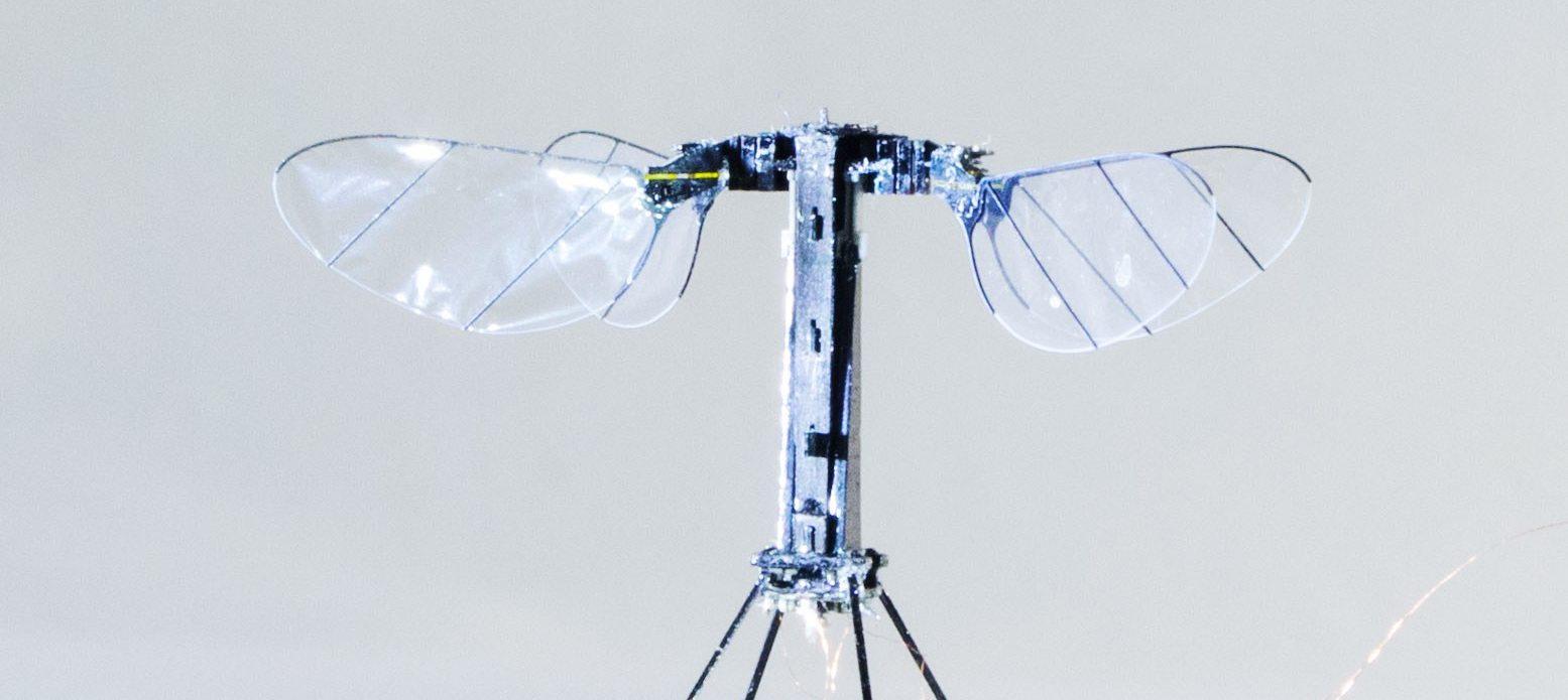 El futuro de la aeronáutica pasa por zánganos robóticos