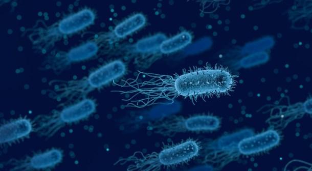 Bacteria ADN Artificial E.coli Genoma