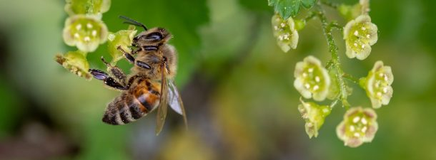 Las abejas son capaces de unir símbolos y números