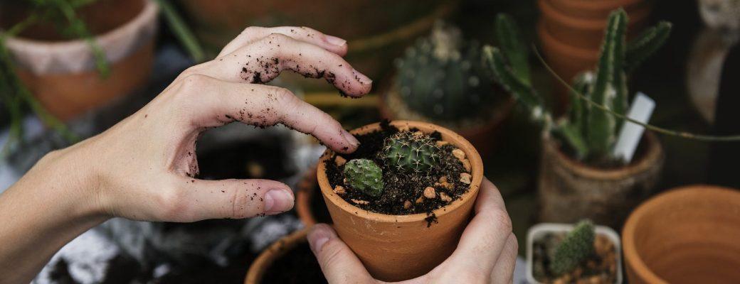 Bacteria Jardinería Tierra Felicidad