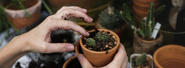 La jardinería te hace feliz debido a una bacteria