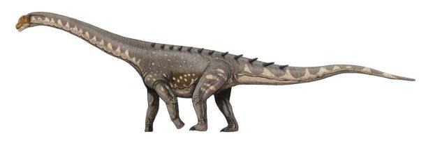 sauropodo