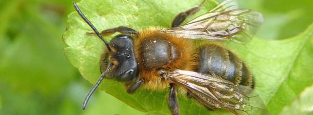 Un entorno sostenible para las abejas gracias al big data