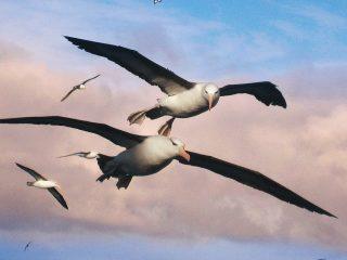 Albatross Sistema de Localización Naufragos