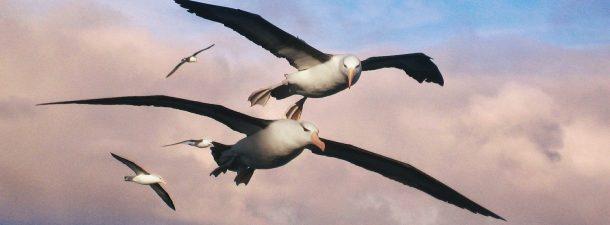 Albatross: localización de náufragos por infrarrojos