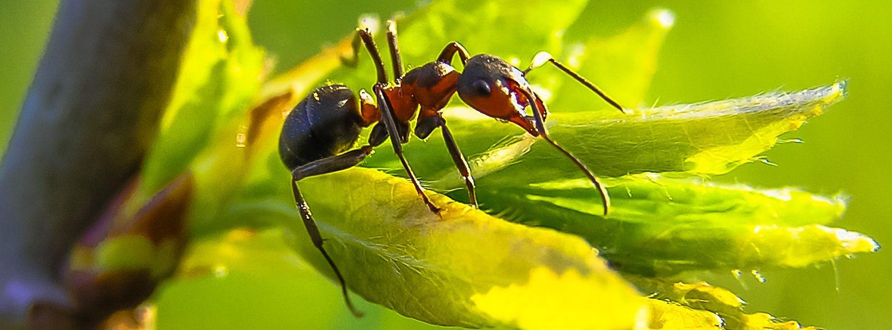 Los robots hormiga autónomos trabajan en equipo para ayudar en misiones de rescate