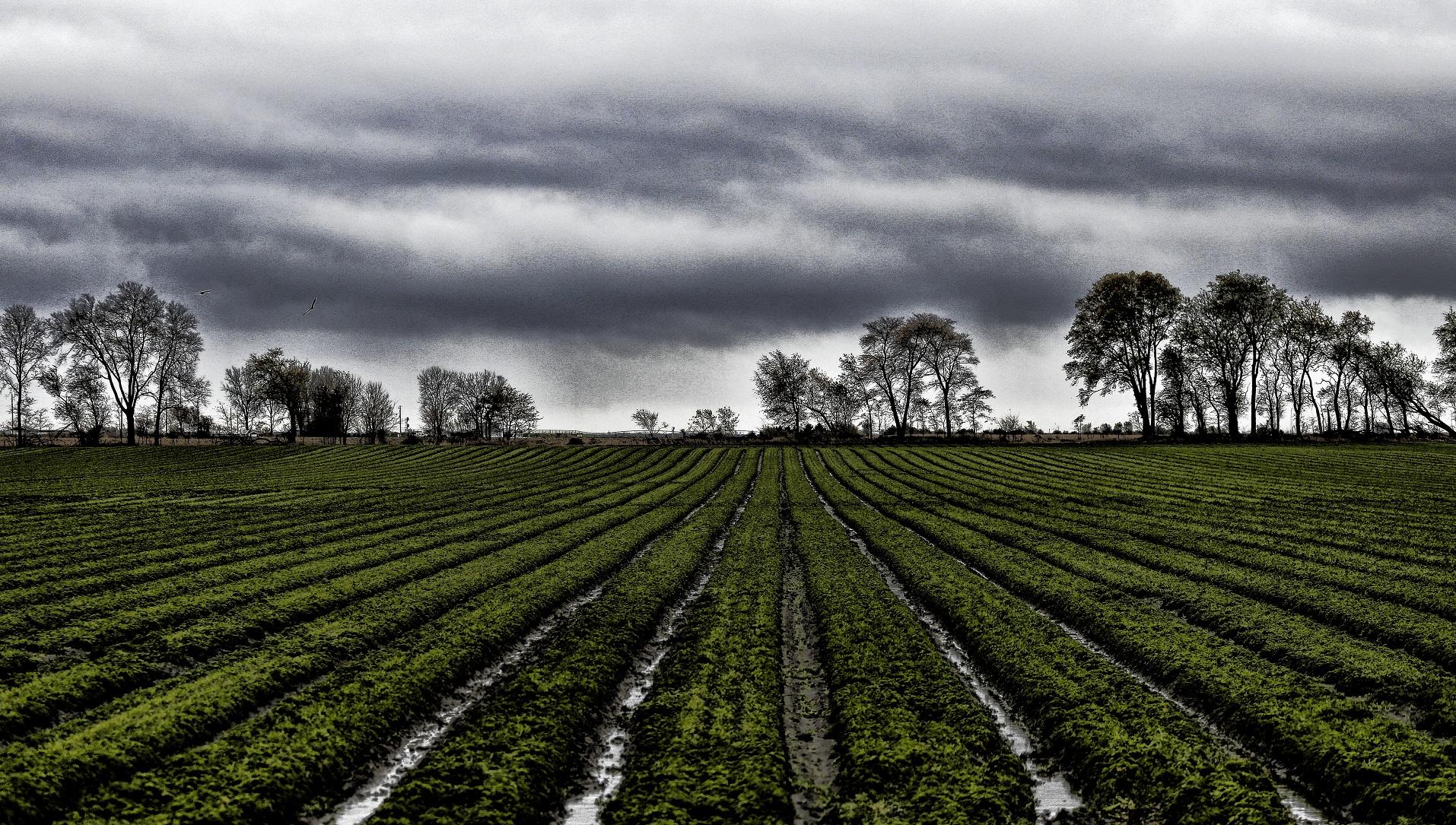 La agricultura, a punto de una nueva revolución